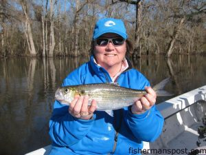 Michelle Dubiel with a shad she hooked while fishing the Neuse River near Vanceboro with Capt. Gary Dubiel of Spec Fever Guide Service.