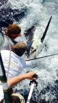 """J.D. Payne and Morgan Morgan prepare to release a blue marlin and add some points to the """"Coverage"""" crew's score in the Hatteras Village Offshore Open. Boat owner Jim Holmes battled this fish and two others in one day on the team's way to victory in the event."""