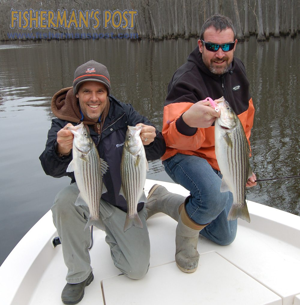 Gary Hurley (Fisherman's Post Publisher) and Max Gaspeny with three striped bass landed after they struck Z-Man PaddlerZ soft plastics in Devils Gut off the lower Roanoke River. They were fishing with Capt. Richard Andrews of Tar-Pam Guide Service.